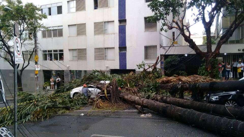 Queda de árvore sobre táxi na região do Barro Preto. Crédito: Reprodução Whatsapp
