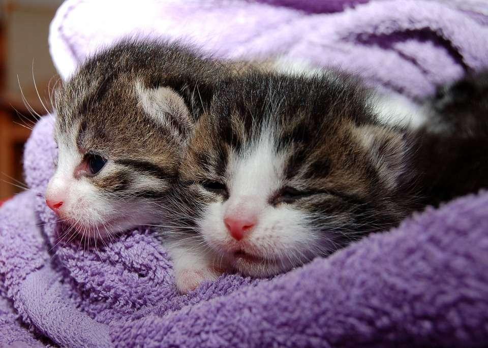 Filhotes de gatos - Foto: Pixabay
